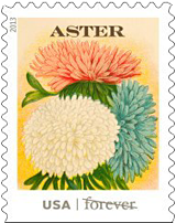 Vintage Seed Packet Forever Stamp, 2013 Aster USA
