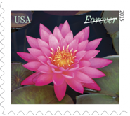 USPS Water Lily Forever Stamp, Flower Stamp