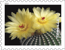 USPS - Cactus Flowers Stamps, 2019