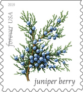 USPS - Winter Berry Forever Stamps, 2019